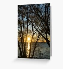 Golden Willow Sunrise Greeting Card