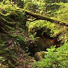 The hidden creek by João Figueiredo