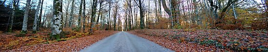Entering the enchanted woods [Gamla Åminne Naturreservat panorama] by João Figueiredo