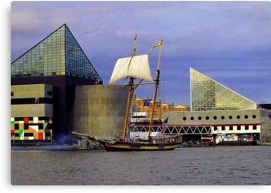 Pride Of Baltimore II by Robert Zunikoff