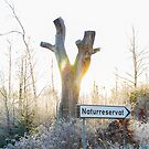 Gamla Åminne Naturreservat entry by João Figueiredo