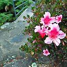 Pink flowers near bridge by William Goschnick