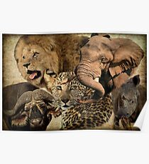 AFRICA'S BIG FIVE Poster