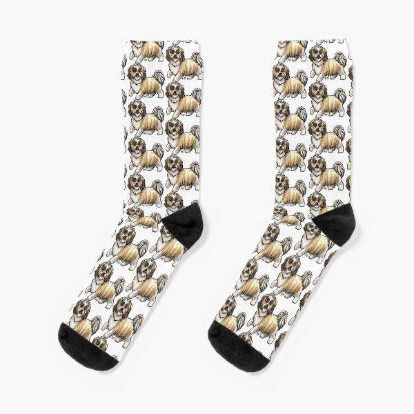 Shih Tzu - Gold Socks