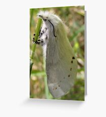 Personality plus Greeting Card