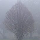 Misty Morning in Melbourne by Lydia Heap