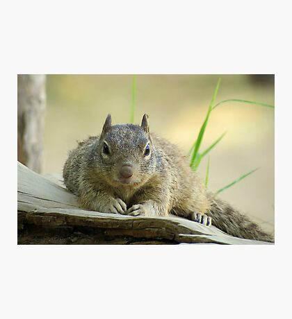 Rock Squirrel ~ Now tell me why your Nuts....... Photographic Print