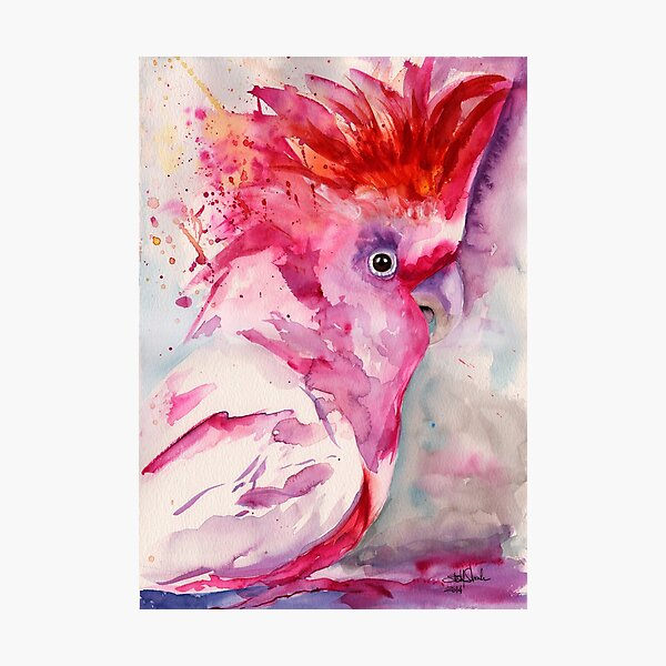 Pink Cockatoo Photographic Print