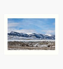 Yellowstone Savannah Art Print