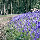 The Bluebell Track by petegrev