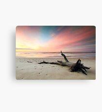 Fallen Tree Beach Canvas Print