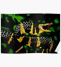 Gold ringed Mangrove snake (Boiga dendrophila) Poster
