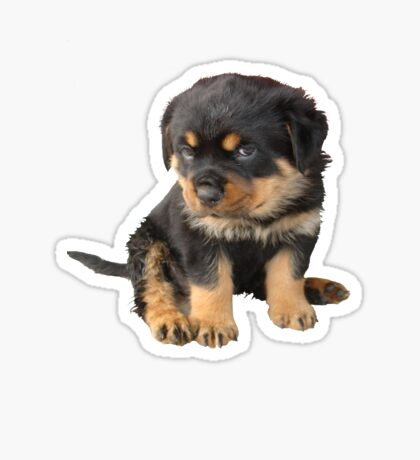 I Don't Need To Be Told I Am Cute Sticker