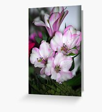 Little Beauties Greeting Card
