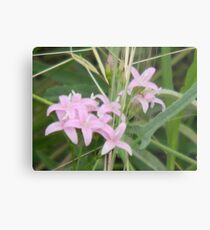 Soft and Fuzzy, Tiny and Pink -View Larger Metal Print