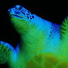 Sea Turtle .... by jdmphotography