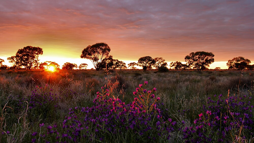 Sunlight II by Mark Cooper