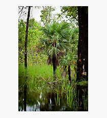 Pandanus Photographic Print