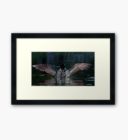 I once caught a fish....Common Loon Framed Print