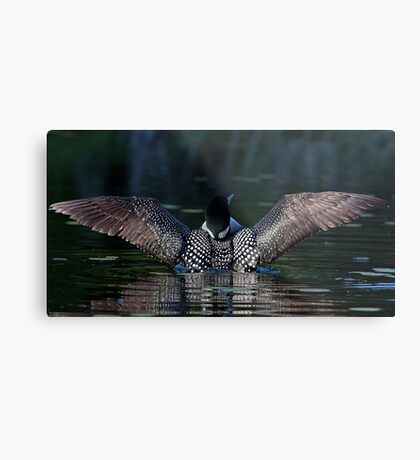 I once caught a fish....Common Loon Metal Print