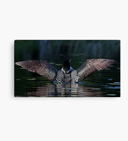 I once caught a fish....Common Loon Canvas Print