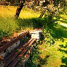 Old bench, old trees, old scenery by Patrick Jobst