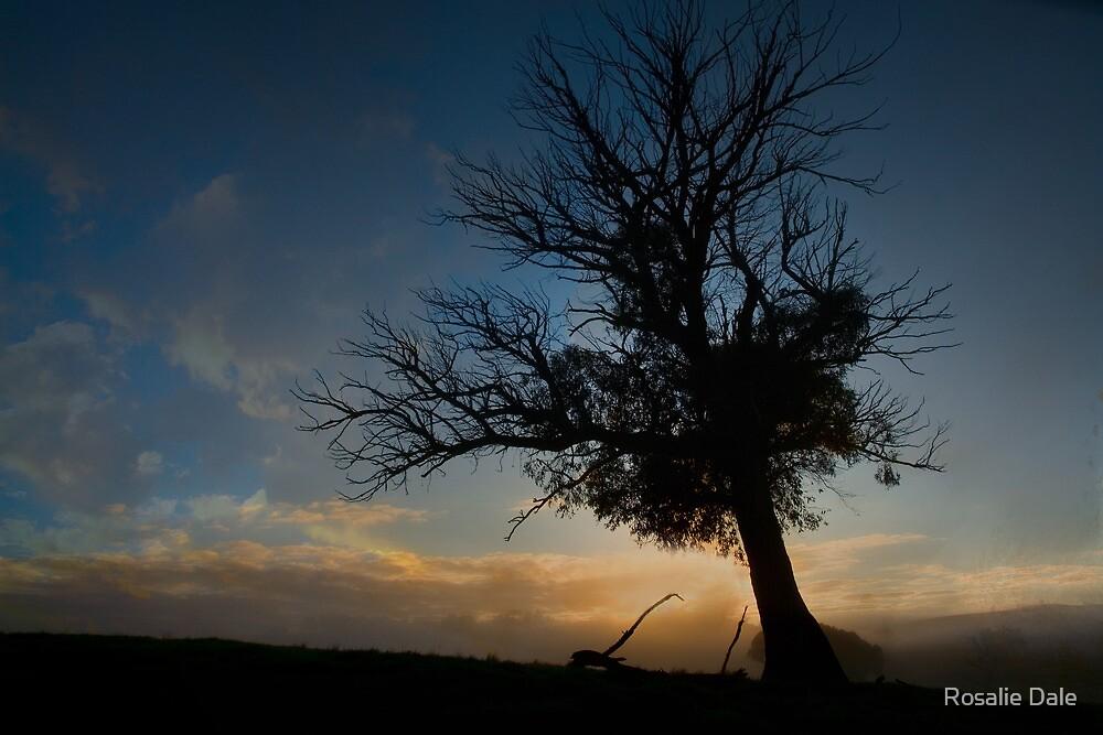 Sunrise silhouette ... by Rosalie Dale