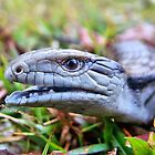Hungry Baby Blue Tongue Lizard Number 1 by julieapearce