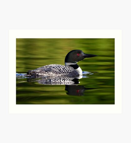 Calming Greens - Common Loon Art Print