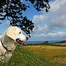 Danish summer landscape with Golden Retriever by Trine