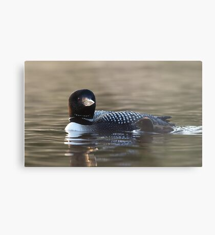 Common loon with chick Metal Print