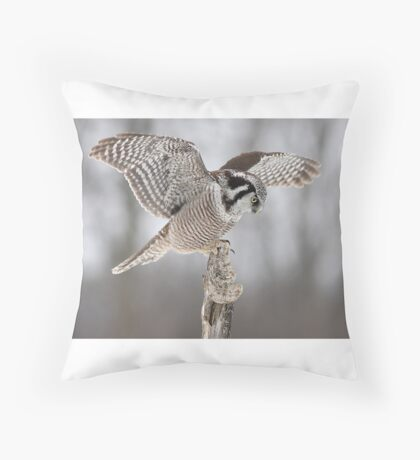 Northern Hawk Owl Throw Pillow