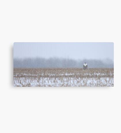 Snowy Owl - peek a boo! Canvas Print