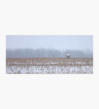 Snowy Owl - peek a boo! Photographic Print