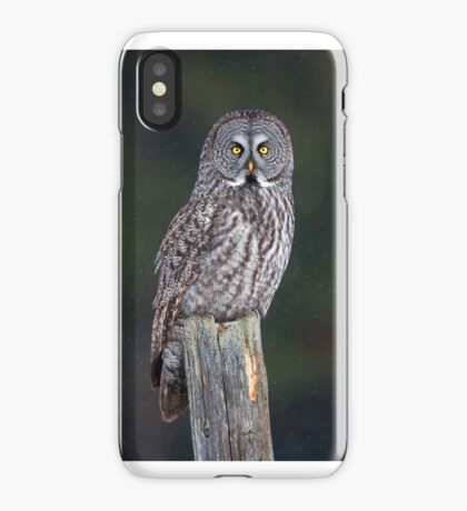 Great Grey Owl on Post iPhone Case/Skin