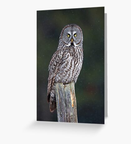 Great Grey Owl on Post Greeting Card