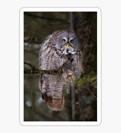 Silence! I keel you! - Great Grey owl Sticker