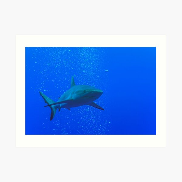 Cool shark guarding you Art Print