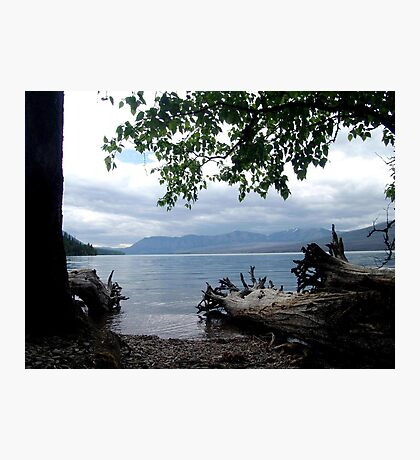 TREES WITH TOES, LAKE MC DONALD, GLACIER NATIONAL PARK Photographic Print