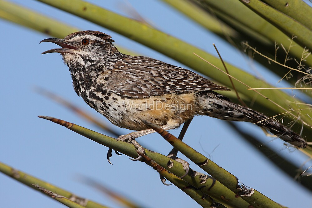 Cactus Wren by WorldDesign