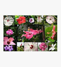Say Hi to Hibiscus Photographic Print