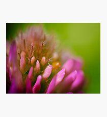 Pink Flower Macro Photographic Print