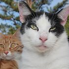 Protector of My Brother by DebbieCHayes