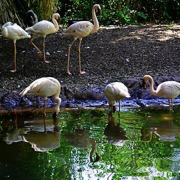 flamingos by NIKULETSH