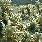 blooming cactus 2 by steveschwarz
