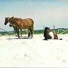three ponies  by steveschwarz