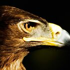 Eagle Eye - Steppes Eagle profile by Jay Lethbridge