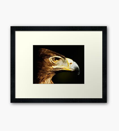 Eagle Eye - Steppen Eagle Profil Gerahmtes Wandbild