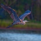 Early Morning Flight by TJ Baccari Photography