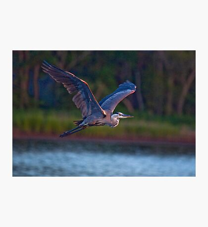 Early Morning Flight Photographic Print